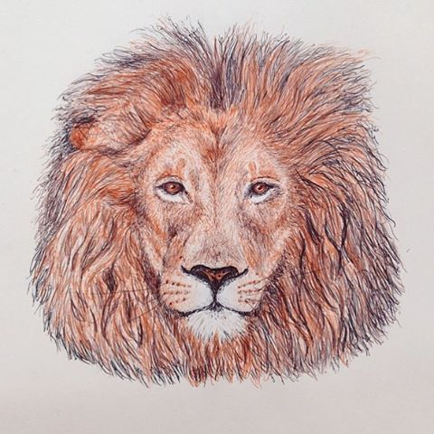 Throwback Thursday to one of my favourites. #roar #lion #biro