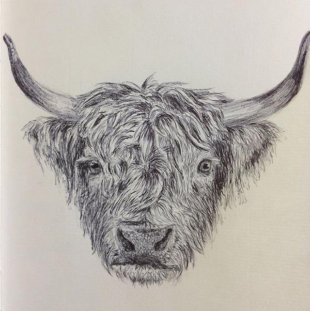 Biro Highland Cow