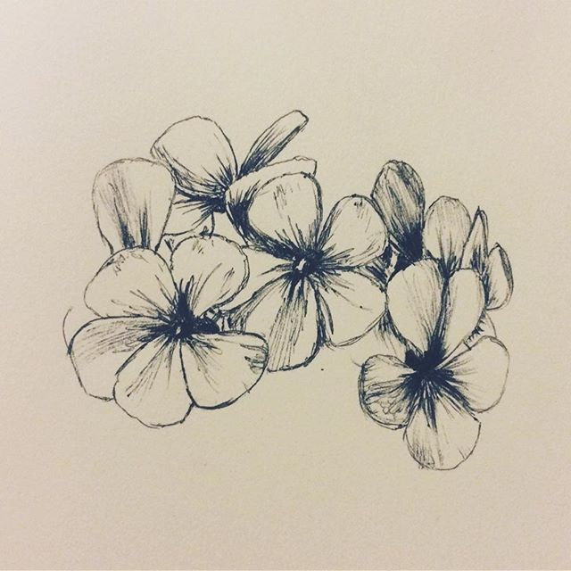 Geranium sketch • • • • #flowers #sketch #geraniums #flower #plant #nature #art #illustration #pen #biro #incomplete #petals #delicate
