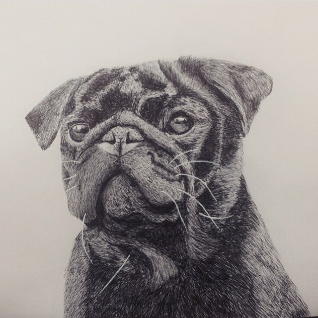 Happy National Dog Day everyone!!! #nationaldogday #dogs #drawings #biro