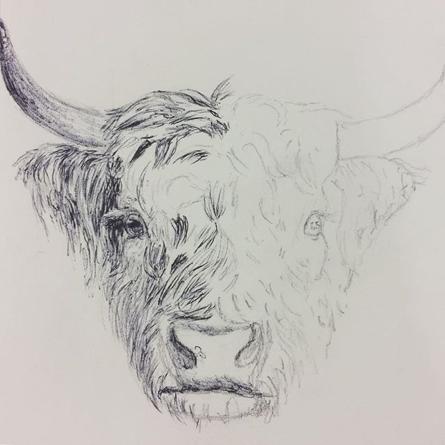 Biro Cow Underway  #biro #cow