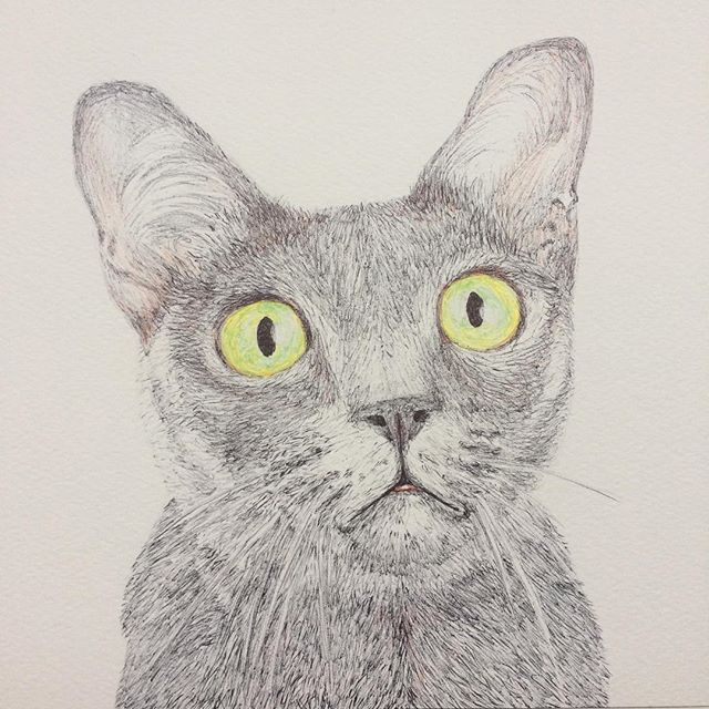 Merlin the Cat Biro, for the lovely @realhackneydave
