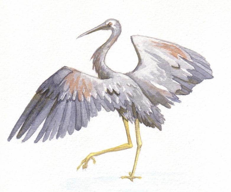 heron (2).png