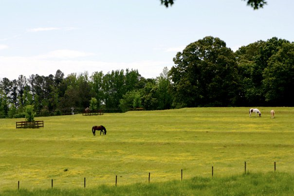 Brookside Farms Green Horse Pastures and Trees