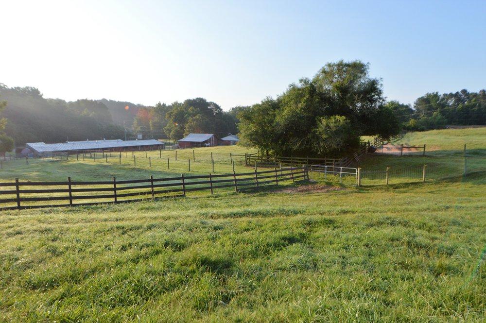 pasture22.jpg