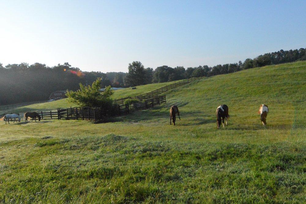 pasture1111.jpg