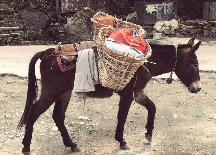 Donkey Nepal Trek.jpg