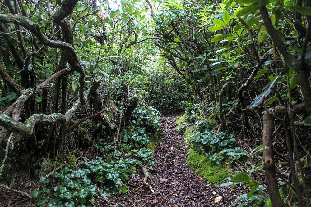 Slickrock Creek Trail #42