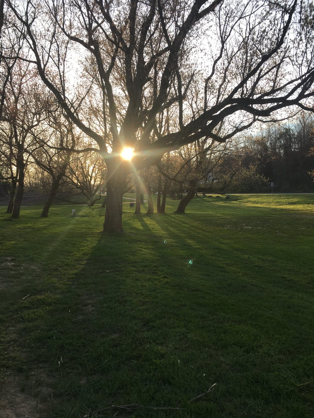 My favorite park to practice Moving & Grounding Meditations