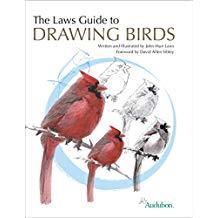 laws bird drawing.jpg