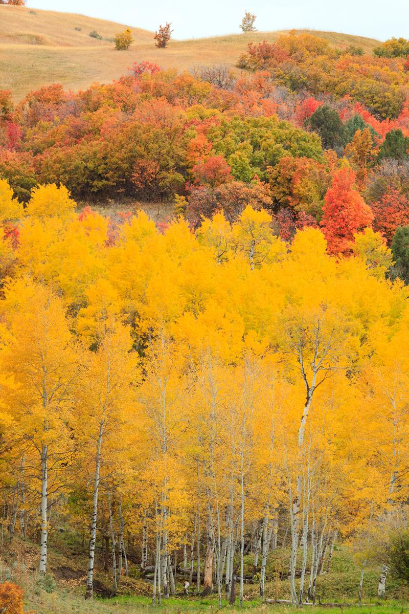 Utah Pastoral