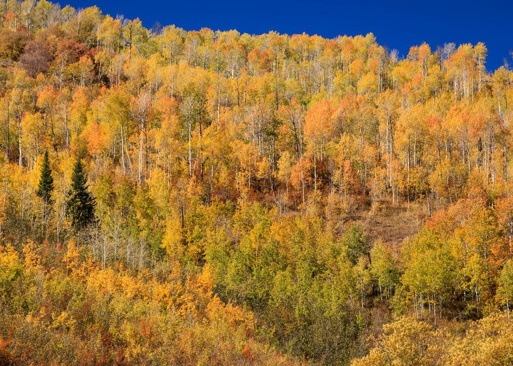 Aspen ridgeline