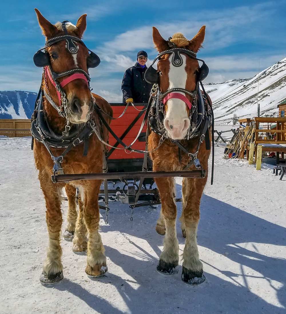 Horse drawn sleigh, National Elk Refuge, Wyoming