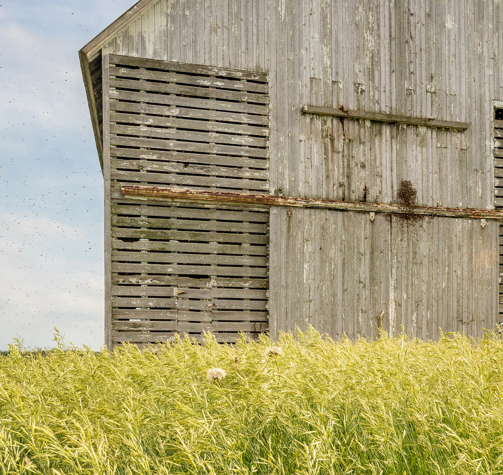 Corn crib and bees, Stark County, Illinois