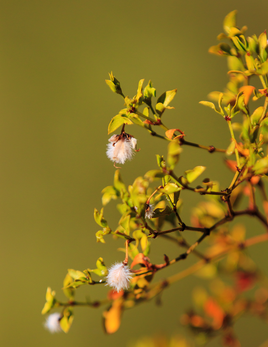 Saguaro NP E 285 flower web.jpg