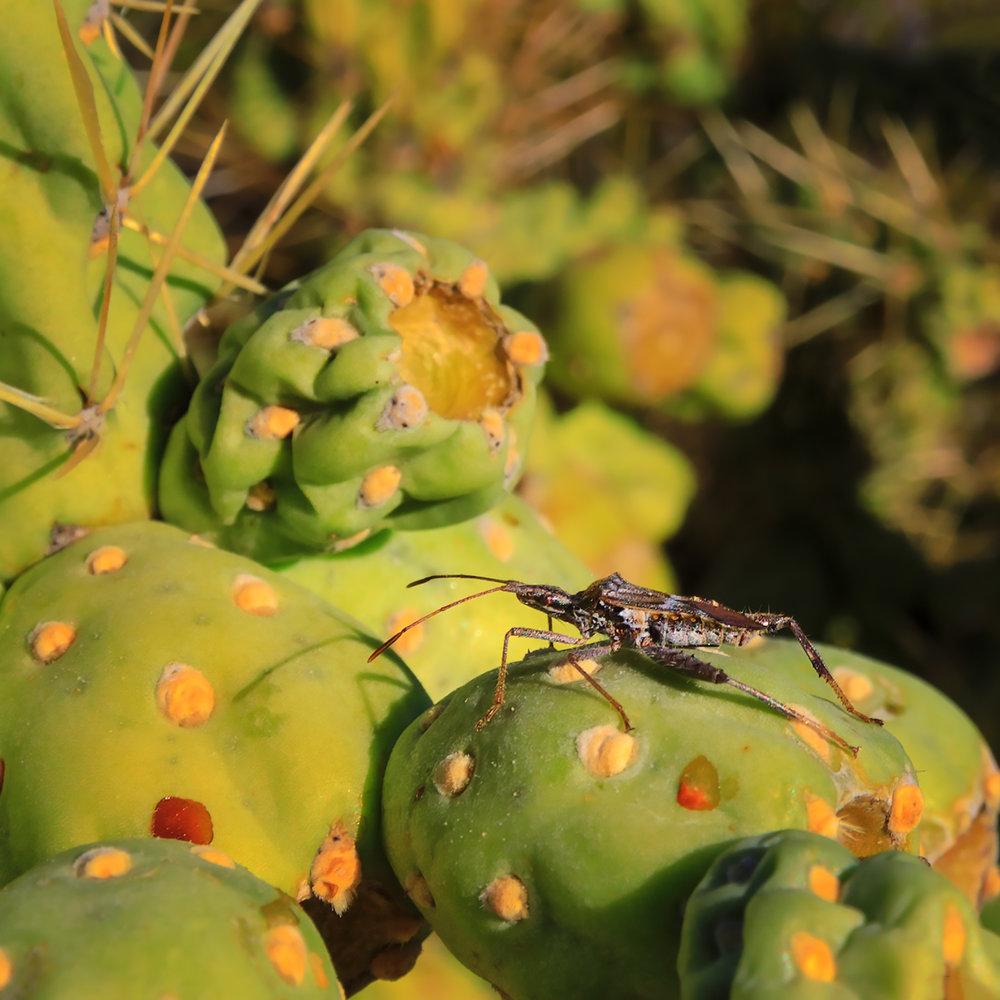 Saguaro NP E 125 bug web.jpg