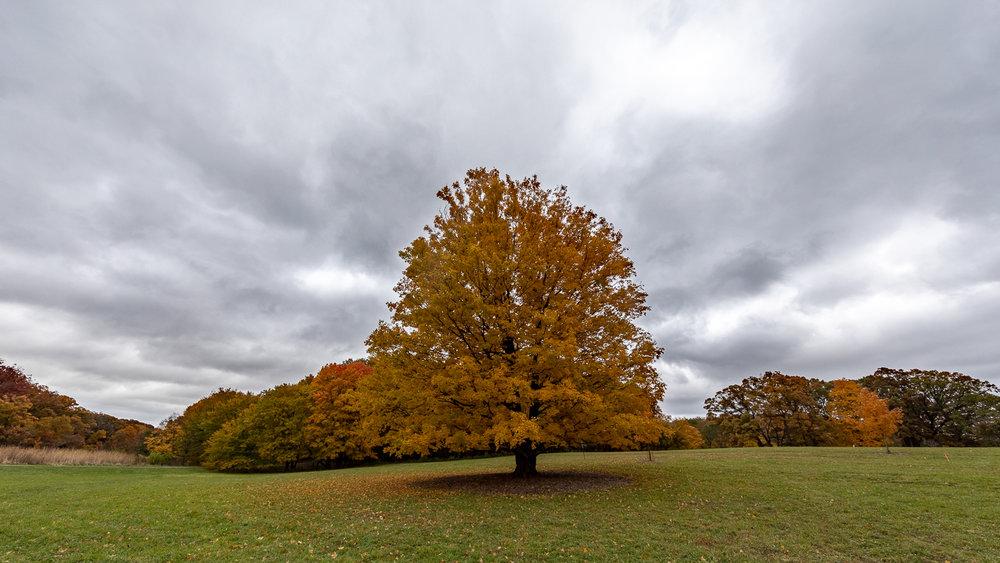 Morton Arboretum, Lisle, Illinois