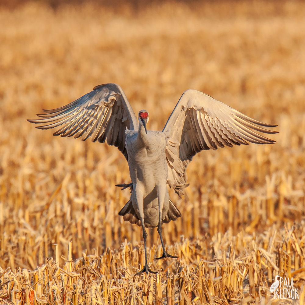 Corny landing