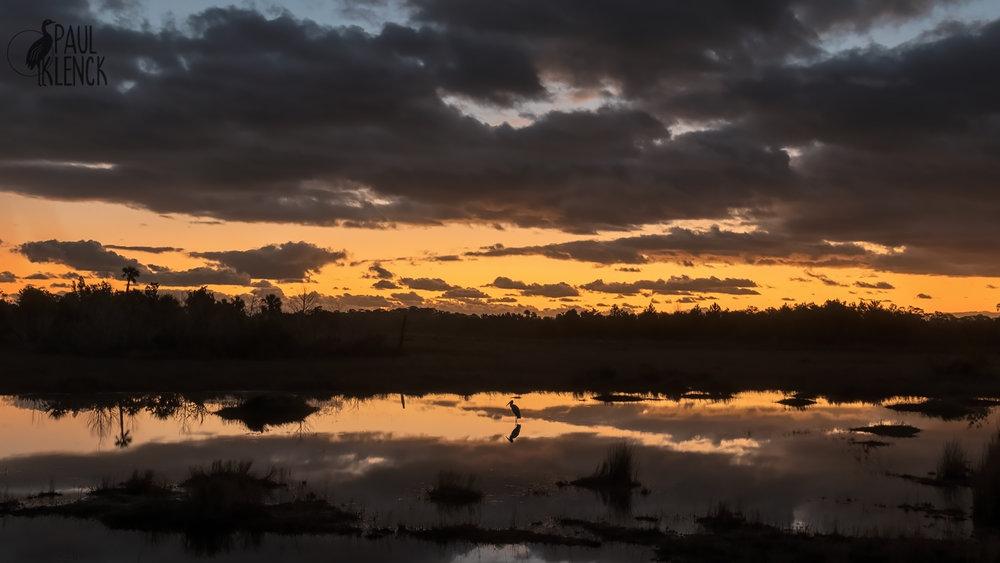 Wood Stork, Merritt Island National Wildlife Refuge