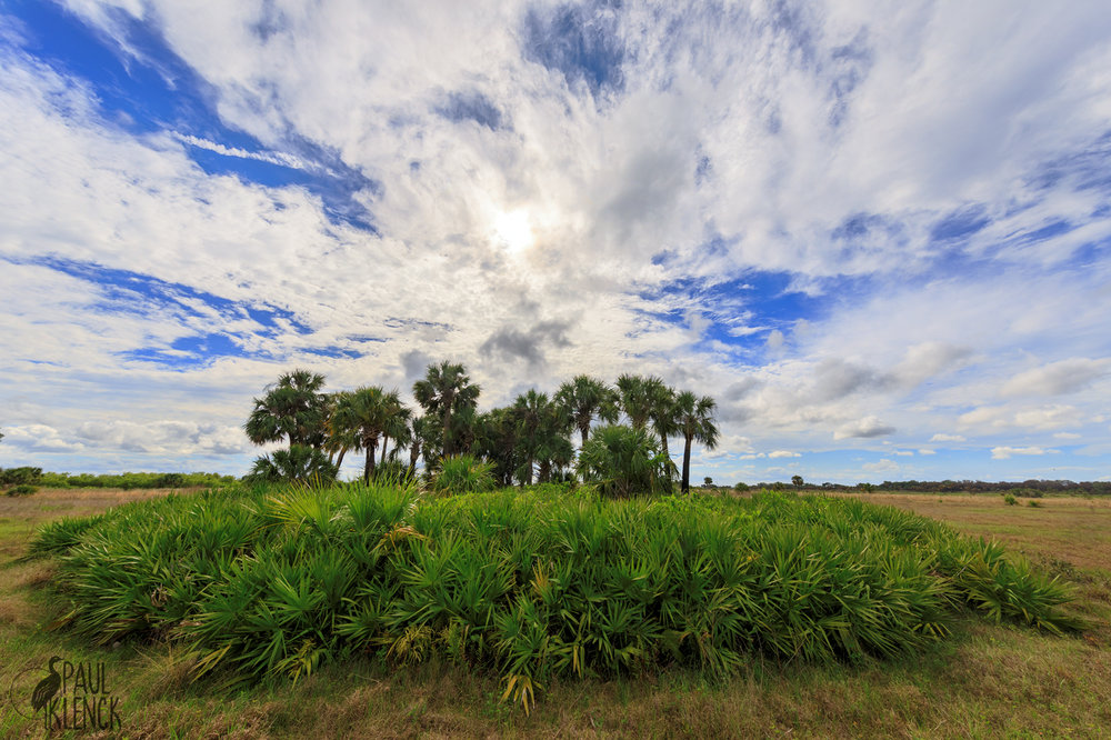 Moccasin Island Tract, River Lakes Conservation Area, Florida