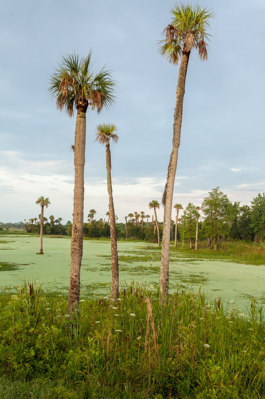 Orlando wetlands
