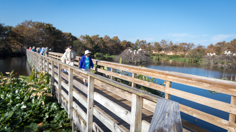 Wakodahatchee Wetlands boardwalk.