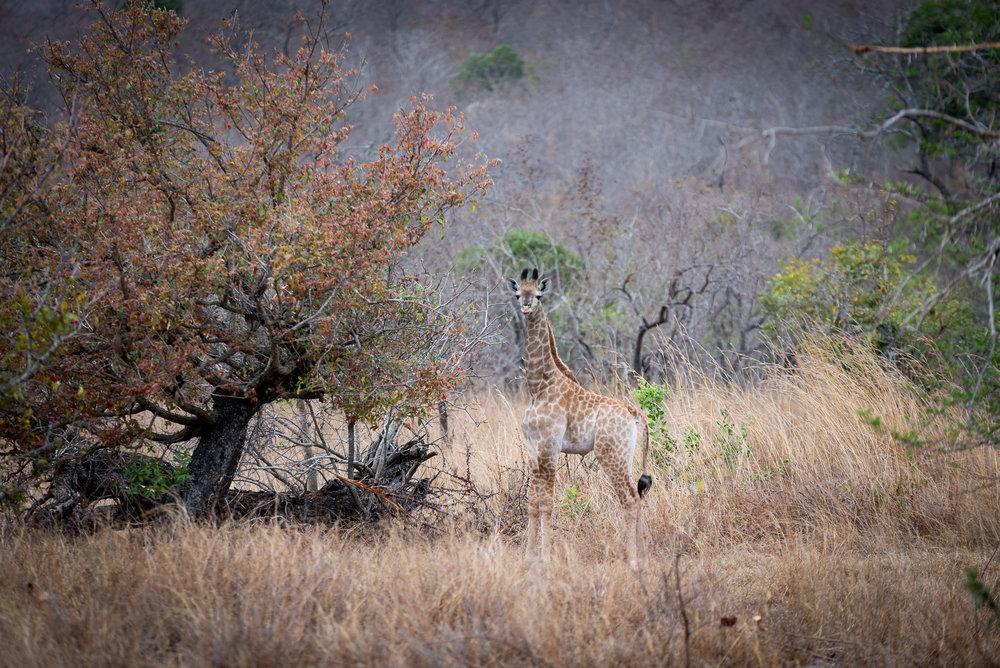 Africa_280.jpg