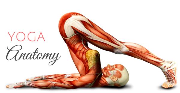yoga-anatomy-quiz-600x310.png