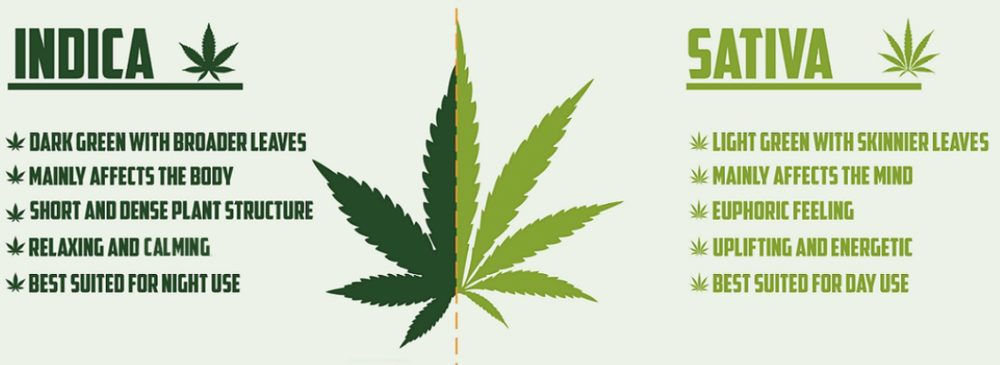 an overview of the marijuana for medical use and the potential legalization in the future of the uni Legalization & regulation medical marijuana 10 facts about marijuana does marijuana legalization lead to increased use.