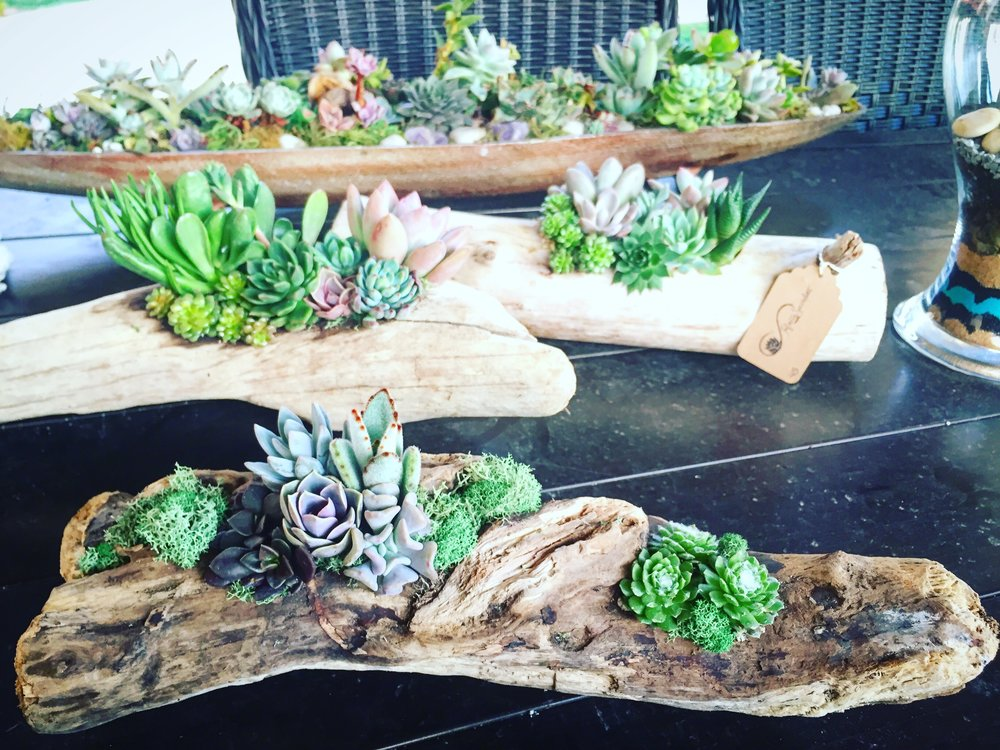 Infinite succulent provides all materials Needed for an exclusive succulent planting event! -