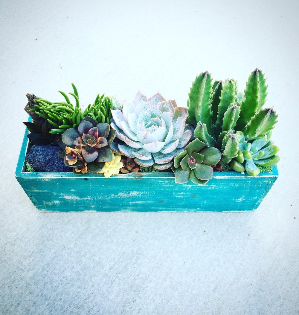 succulent planter workshops -