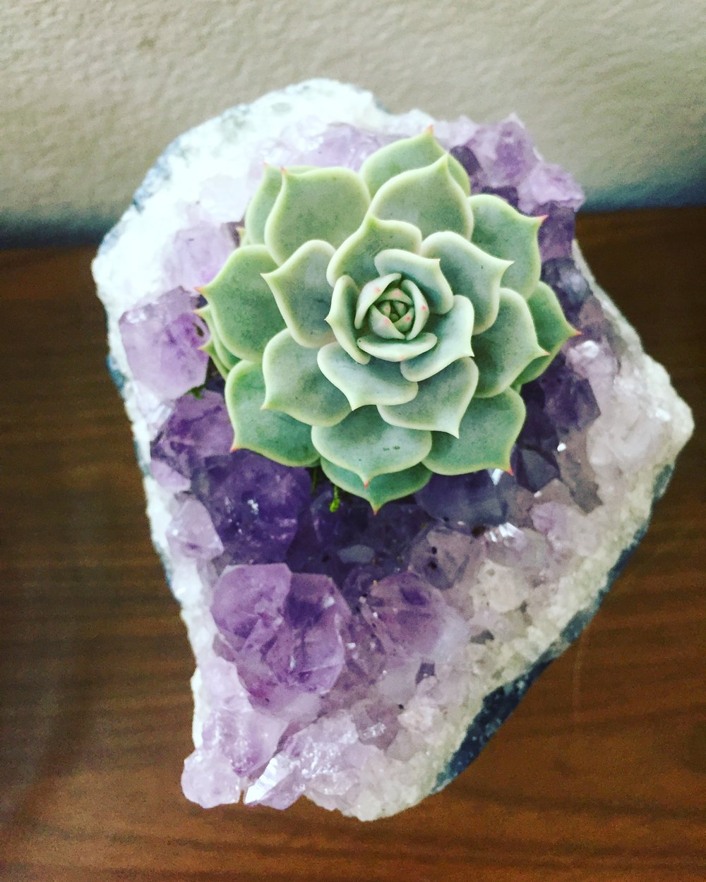 Succulents in Crystals - Light:indoors; provide bright indirect light.Water:water at base of plant, enough to saturate the soil, only when soil is totally dry (~3-4 weeks).If getting more light may need to be watered more frequently.
