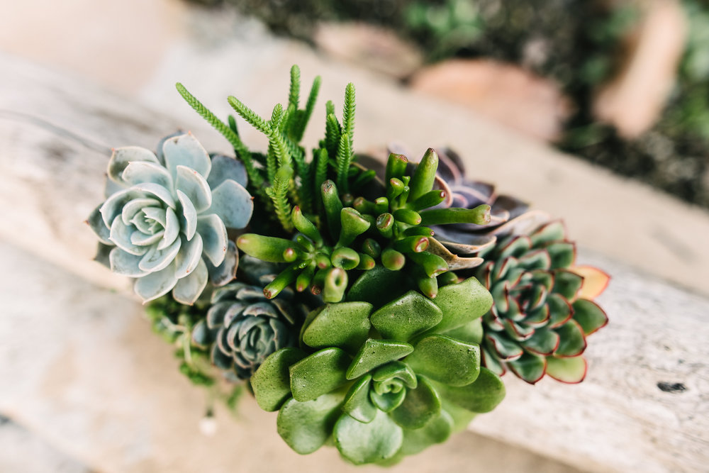 WEB 2018 Marie Monforte Photo_Infinite Succulents -22.jpg