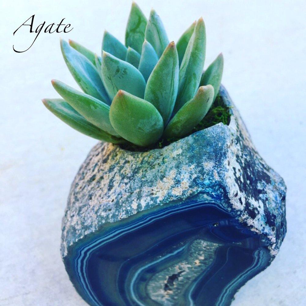crystalsucculents_infinitesucculent_-01-25 16.05.04-1-3.jpg