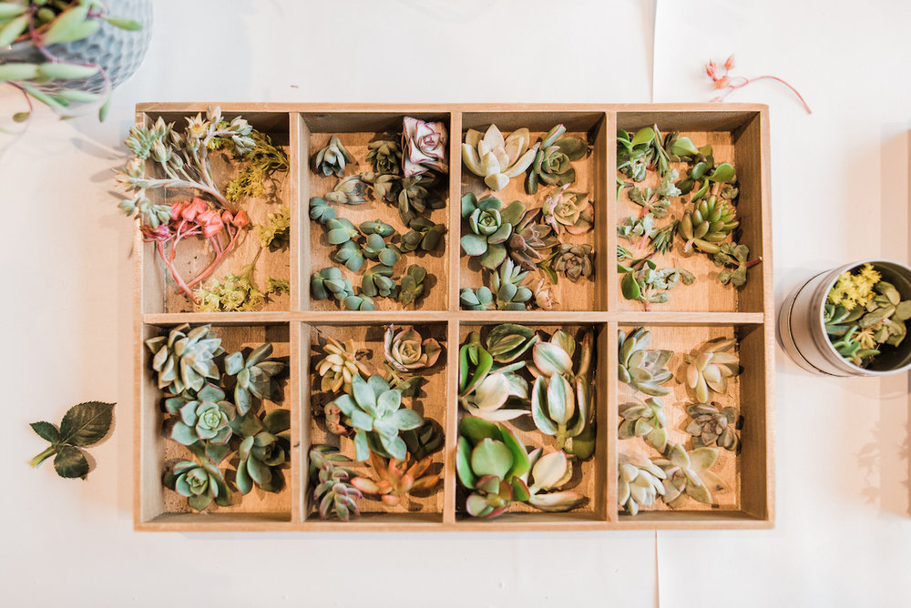 WEB Marie Monforte Photo_Succulent Workshop BHLDN-11.jpg