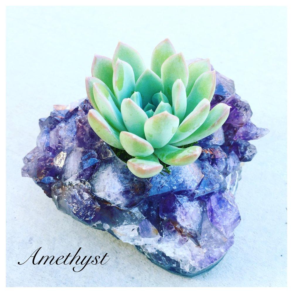 crystalsucculentsamethyst.jpg