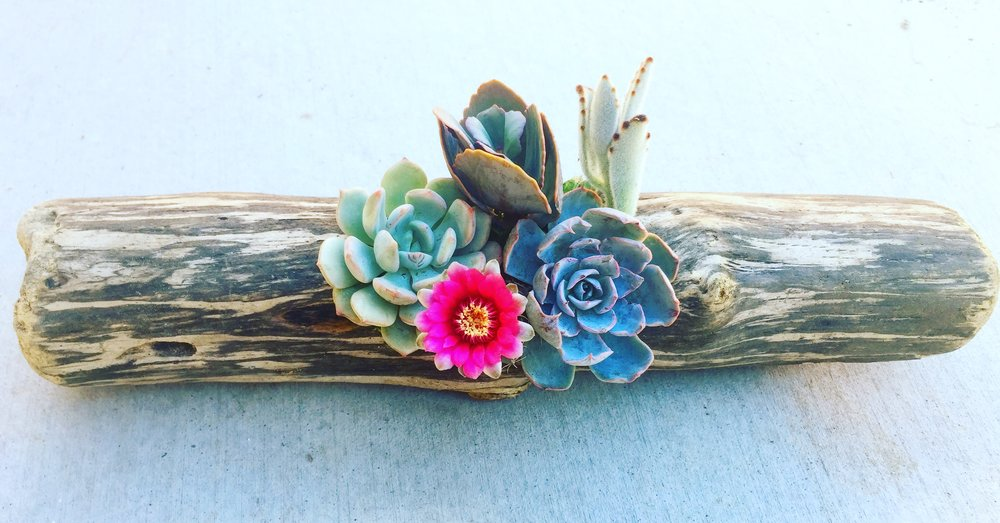 driftwood succulents - Bring the beauty of nature inside with these lovely and long lasting pieces of planted art. Displayed inside or out, these are sure to impress!
