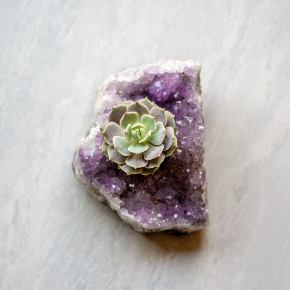 infinitesucculent_crystals_ccbiz_gabaccia__GAB5862.jpg
