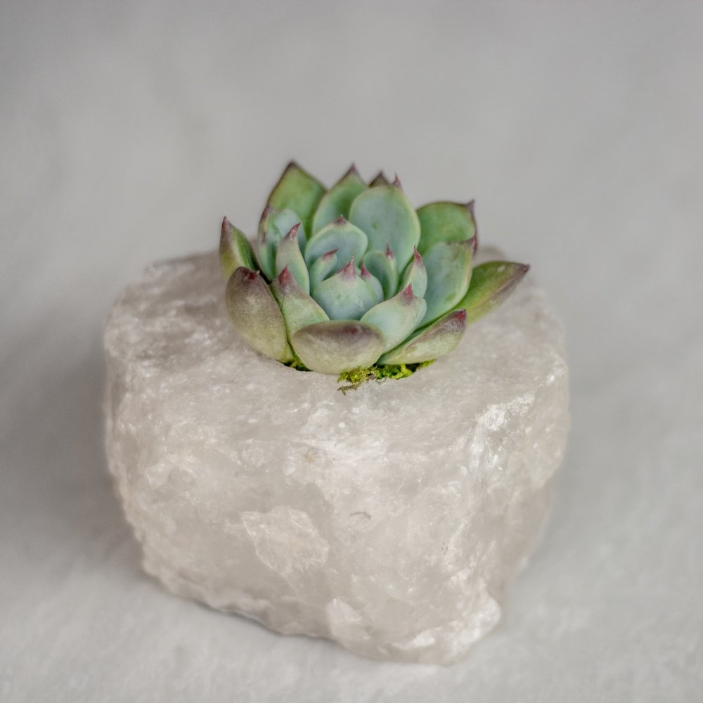 infinitesucculent_crystals_ccbiz_gabaccia__GAB5886.jpg