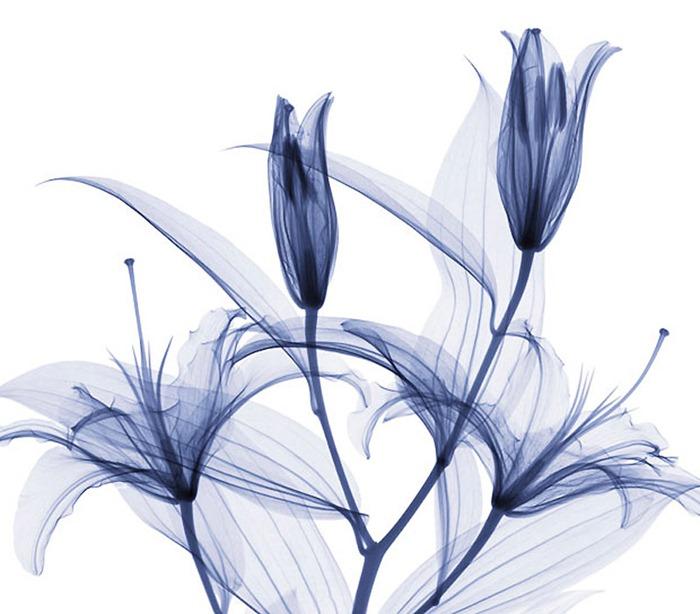 flower-xray (3)[2].jpg