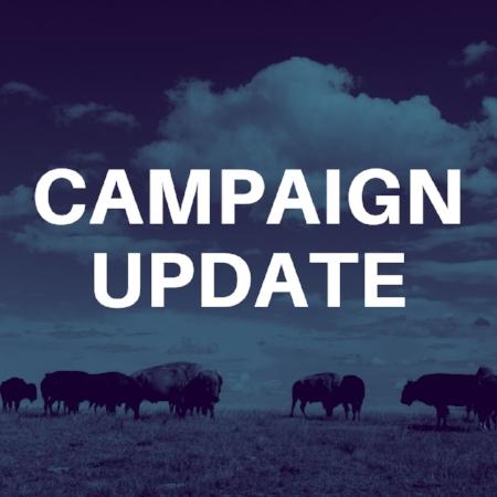 Campaign update (1).jpg