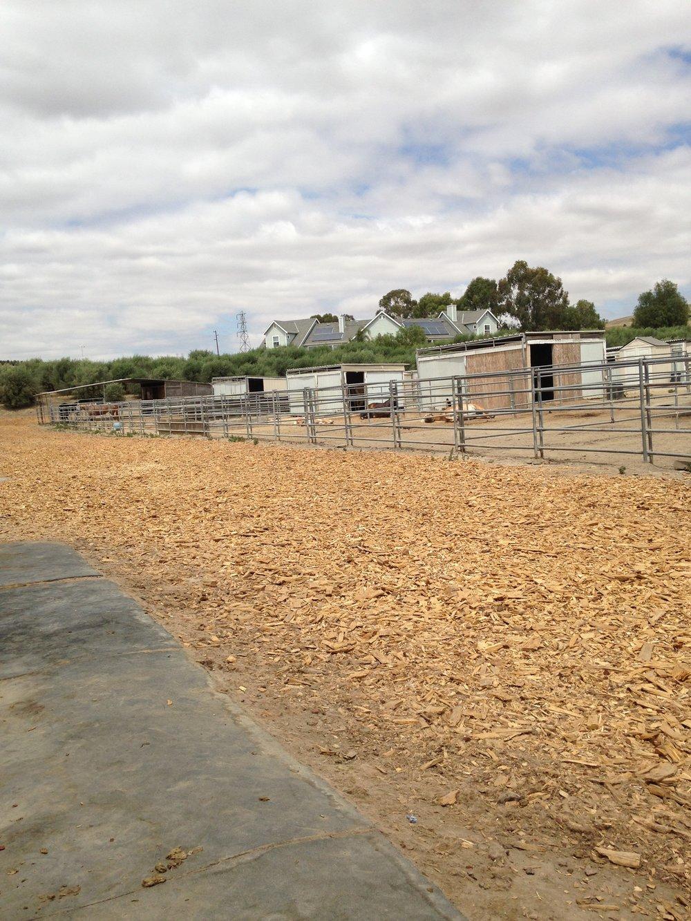 horse stalls.JPG