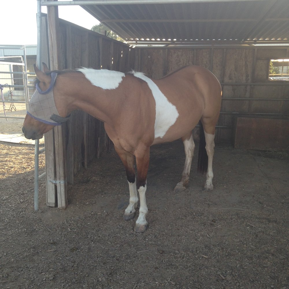 Cindy Loo   Owned: 3 years  Estimated age: 9 years old  Personality: jealous for attention, diva, alpha mare, very affectionate!