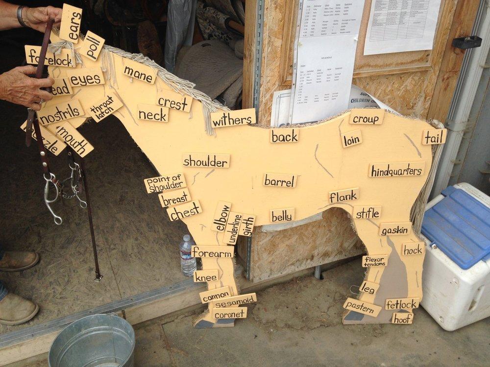 horse parts.JPG