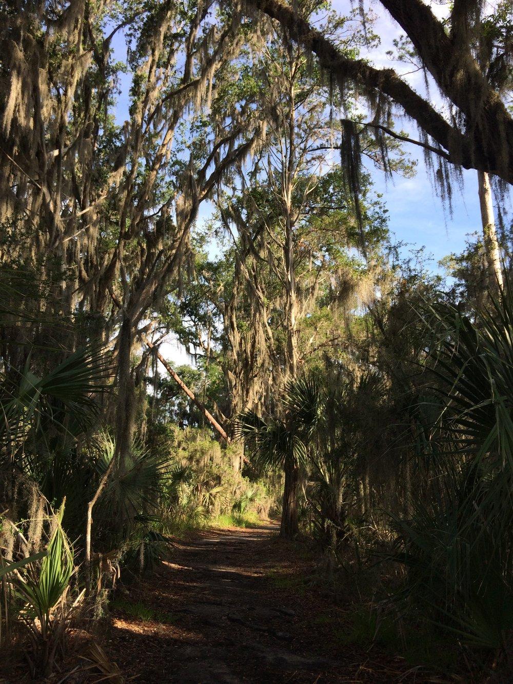Trail run path