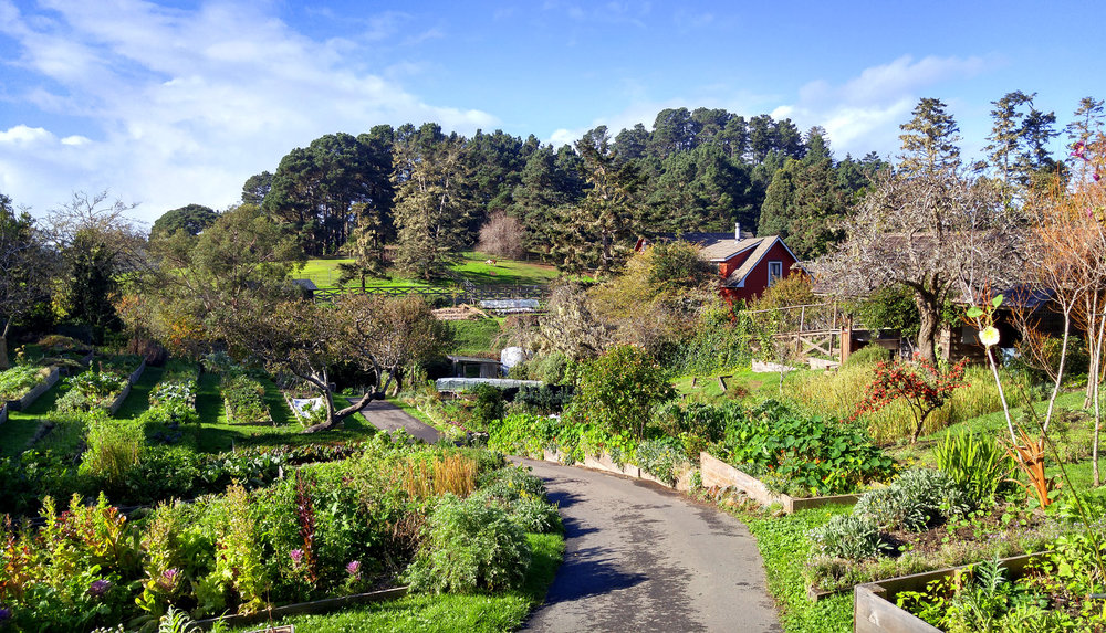 The huge, organic kitchen garden for Raven's, Mendocino CA. Photo: Mary Charlebois
