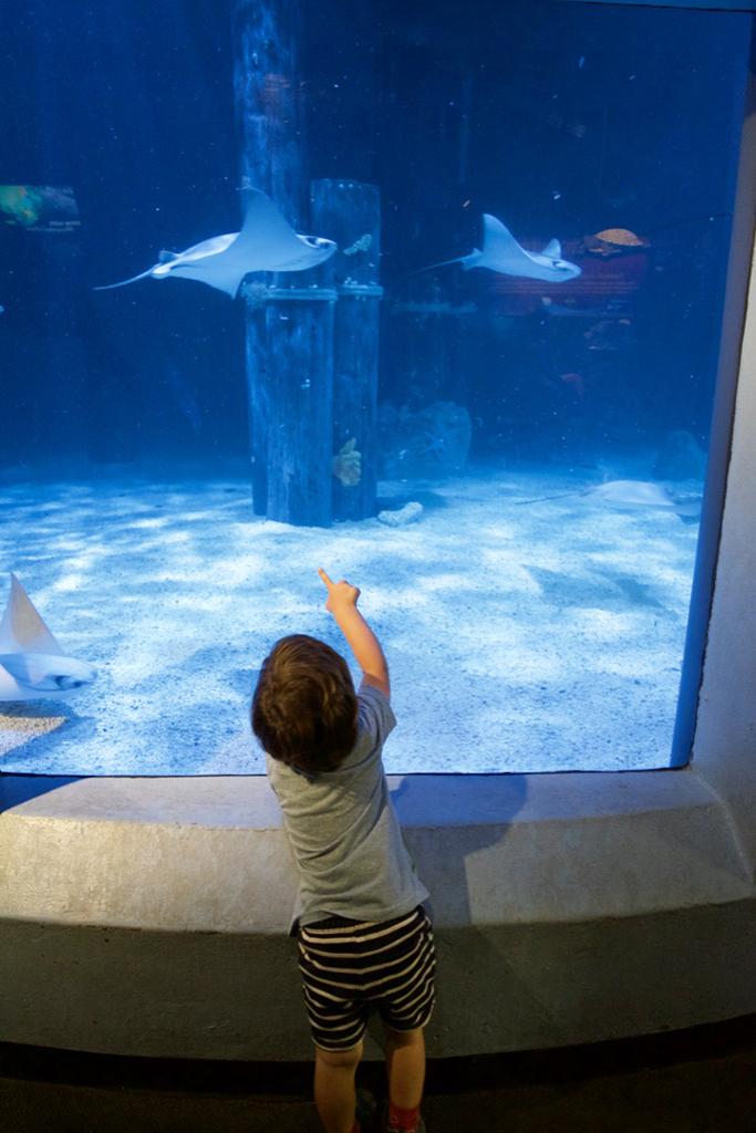 mystic aquarium2.jpg
