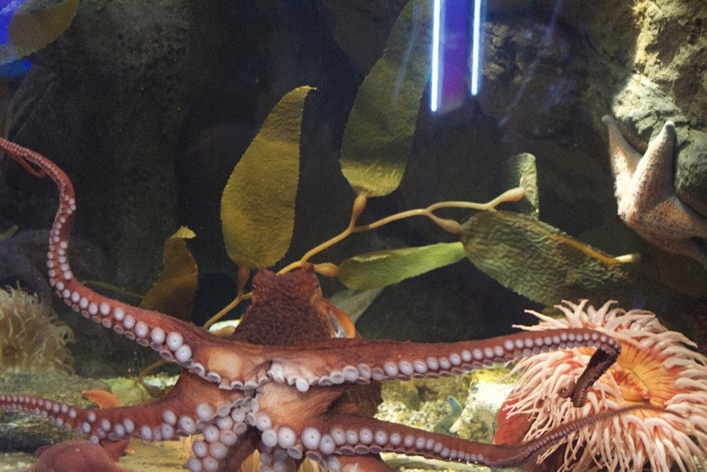 mystic aquarium3.jpg
