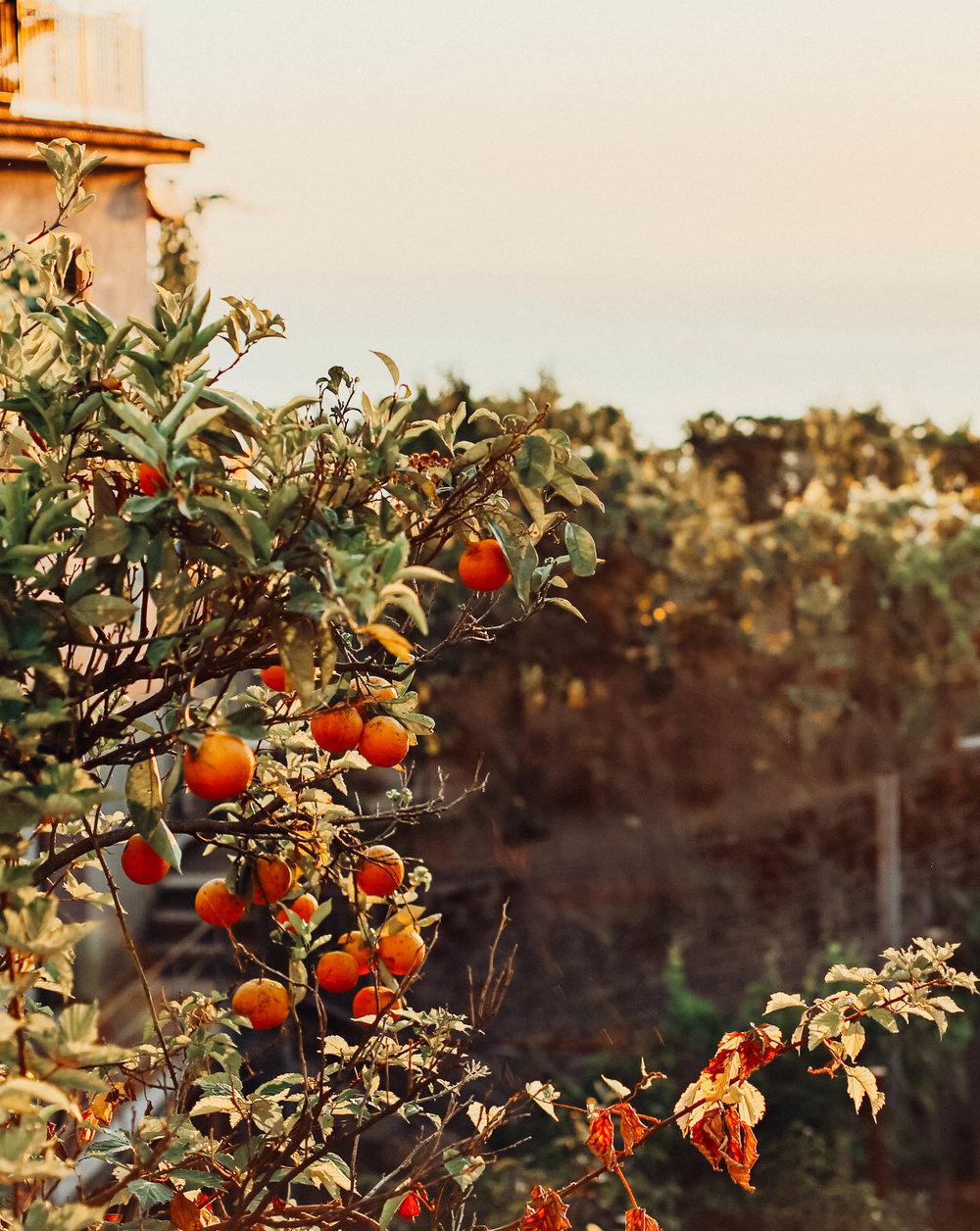 AmalfiCoast-11.jpg