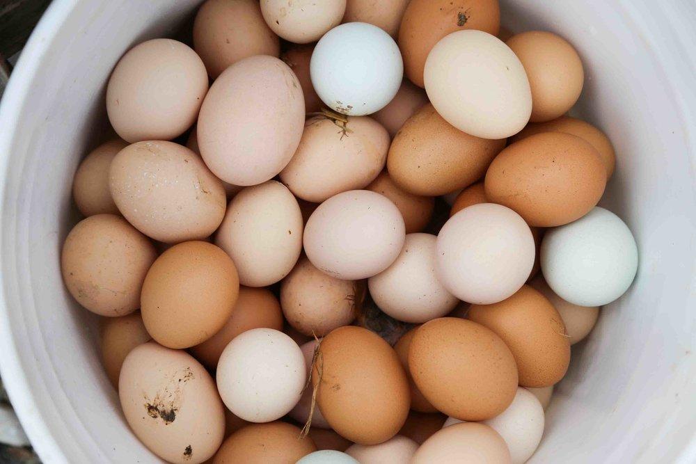 44_eggs2.jpg